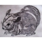 Chinchilla anm0022